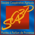 logo sca3p avec texte web