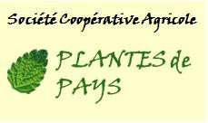 Plantes de pays